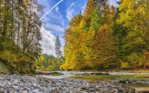 nature-water-ecosystem-nature-reserve-wilderness-leaf-1442041-pxhere-400x250